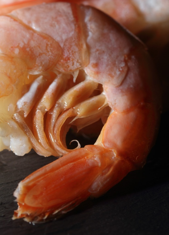 Shrimp001_crop